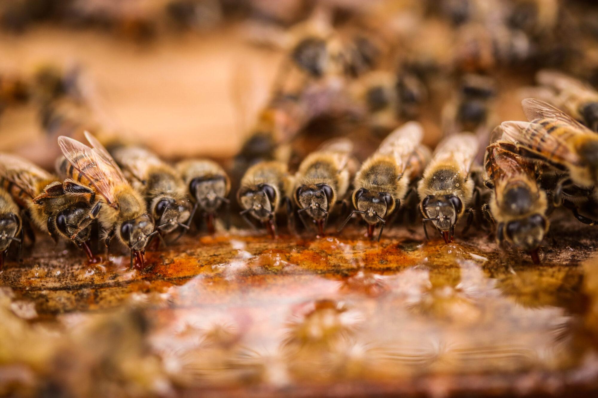 R9 Hive & Honey